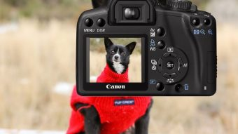 The Best Dog Camera for home - Post Thumbnail